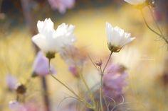 Fleurs fraîches champêtres du jardin. Photo And Video, Artist, Plants, Photography, Instagram, Gardens, Fresh Flowers, Photograph, Photography Business