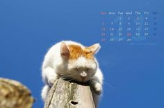 かご猫 〜cafe:2016年11月カレンダー〜  初雪の 朝陽に眠る 柿落葉…霜月