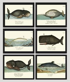 Whale Art Print Set of 6 Antique Beautiful Ocean Sea Marine Nature Colored Natural Science Chart Illustration Home Wall Decor Unframed GNT. Beautiful set of 6 prints based on antique illustrations from 1746. Wonderful details, colors and natural history feel. • The prints measure 4x6, 5x7, 8x10, or 11x14 inch. based on your selection and come with a white border for easy framing. • Printed on professional artist archival matte paper. • The prints are part of Amazon Handmade program and…