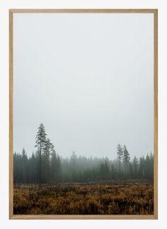 Fine little day - Skog poster