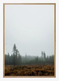 Fine little day - Skog poster
