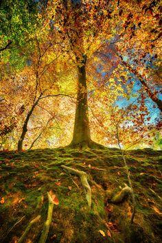~~Fall mood | autumn in Solvay Park, Belgium | by Jean-Francois Chaubard~~