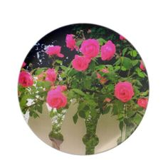 Pink Rose Pickets Dinner Plate - Photography of pink roses (called Climbing Red Blaze – but actually pink) arched across the top of a white picket fence. Beautiful pink roses swag across the picket tops. Colors are pink, white and garden green.#zazzle plate #rose plate #melamine plate #zazzle roses #zazzle flowers #roseart Visit my Zazzle Store at: http://www.zazzle.com/serenitygardens?rf=238170457442240176