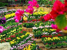 arte y jardinera diseo de jardines el jardn en macetas