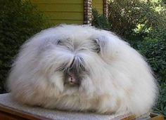 Fluffy explosion!