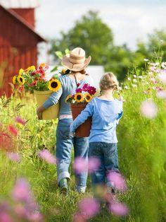 picking fresh flowers