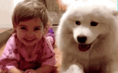 Partners in Crime funny cute animals dog gif puppies funny animals animals gif dog gifs kidm cute kids Happy Animals, Animals And Pets, Funny Animals, Cute Animals, Animal Puns, Wild Animals, Cute Puppies, Cute Dogs, Samoyed Puppies