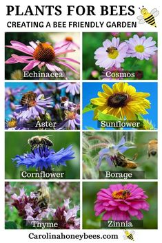 Is fun and easy to create a bee friendly garden in your backyard. Plants for be… Is fun and easy to create a bee friendly garden in your backyard. Plants for bees are available in all sizes and colors. Don't delay-help save the bees and other pollinators. Bee Friendly Flowers, Bee Friendly Plants, Raising Bees, Backyard Plants, Outdoor Plants, Garden Shrubs, Large Backyard, Save The Bees, Cool Plants