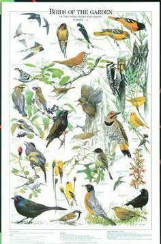 Birds of the Garden Summer Identification Chart
