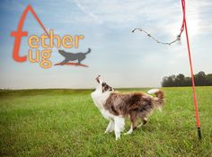 interactive Tether Tug Dog Toy (All Sizes Available) On sale @Coupaw