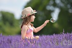 """""""CJP Mayfield Lavender Farm"""" by Chrisjphotography 