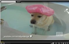 Dogs And Cats Love Baths In This Video Mashup