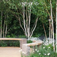 Backyard Garden With Benches And Birch Trees : Enchanting Beauty Birch Trees In Your Garden