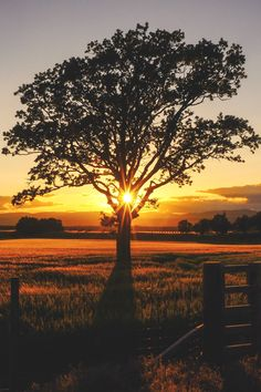~~July, Perthshire | lone tree sunset | by Joyce Grieves~~