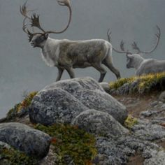 George River Caribou by Robert Bateman