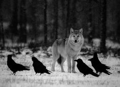 The wolf and his little minions.