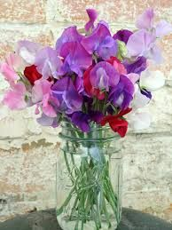 Sweet Peas - a delicate and fragrent flowers available in most colours - I especially love the very pale blue and creamy tones..