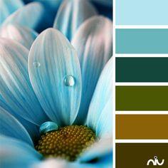 blue daisy (flora)