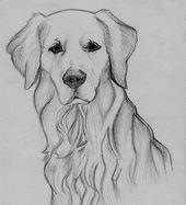 Zeichnung des golden retriever - Bleistift Drawing of the golden retriever - pencil Realistic Animal Drawings, Cool Art Drawings, Pencil Art Drawings, Art Drawings Sketches, Easy Drawings, Drawing Art, Sketches Of Dogs, Watercolor Drawing, Drawings Of Dogs