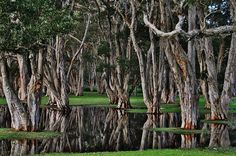 http://fineartamerica.com/featured/water-and-trees-stefan-pettersson.html