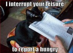 Report a hungry