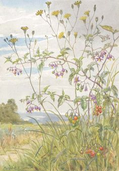 Margaret W Tarrant MEDICI PRINT Wild Hyacinth