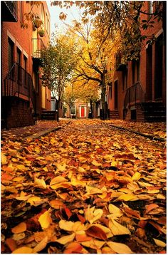 I love summer and all but, I absolutely LOVE fall! Especially in and around Philadelphia! Counting the days...