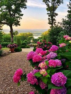 new hydrangea allée designed by has completely captivated our hearts! Tag your fellow hydrangea lovers to share the beauty. Dream Garden, Home And Garden, Hortensia Hydrangea, Hydrangeas, Hydrangea Flower, Hydrangea Garden, Formal Garden Design, Garden Images, Better Homes And Gardens