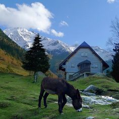 A fairy tale behind this picture. We were high up in the Pyrenees at the mountain stream Gave de Bious at elevation of 1241 meter. We met a friendly Poitou Donkey at this beautiful Chalet is located 3 km from the mountain pass Portalet d'Aneu and border crossing in the Pyrenees, between France and Spain. De Pyreneeën -  Pyrénées - Pirineos - Pirineus - Pirinioak zijn een gebergte, gelegen op de grens van Spanje en Frankrijk. Het gebergte strekt...  Courtesy: Ben Thé Man, Amsterdam (Holland).