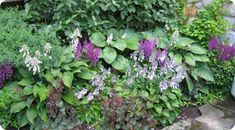 Ever since we moved into our house, I've had dreams of walking down our stone path to the backyard with colorful bursts of flowers spraying in all directions. Besides planting a few hostas here and...