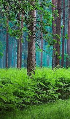Trees and ferns Outdoor Photography, Nature Photography, Beautiful World, Beautiful Places, Wonderful Images, Beautiful Pictures, Tree Forest, Belleza Natural, Green Trees