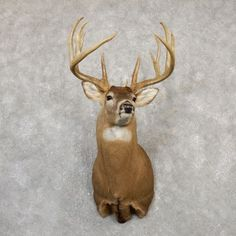 Taxidermy For Sale - The Taxidermy Store has a wide selection of Whitetail Deer mounts & antlers, wildlife and outdoor decor products for sale. Deer Mount Decor, Deer Decor, Taxidermy Display, Taxidermy For Sale, Deer Shoulder Mount, Deer Mounts, Deer Hunting, Hunting Stuff, Decimal