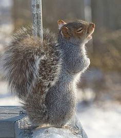 Funny picture of a squirrel that appears to be singing his heart out.jpg -- [REPINNED by All Creatures Gift Shop]: