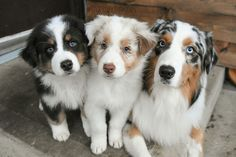 Their ice colored eyes plus their multi-toned fur! I LOVE IT!
