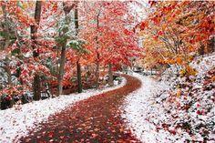 Cuando el invierno y el otoño se encuentran - 20Mejores fotos del mes que nopuedes dejar deadmirar