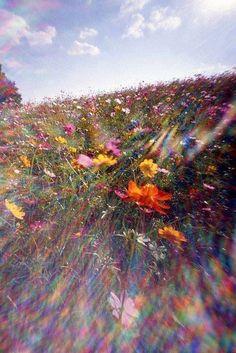 Spring Aesthetic, Nature Aesthetic, Flower Aesthetic, Aesthetic Photo, Aesthetic Pictures, Retro Aesthetic, Aesthetic Backgrounds, Aesthetic Iphone Wallpaper, Aesthetic Wallpapers