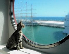 Captains Cat