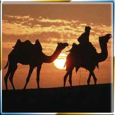 camel riding at sunset in israel. this will be experienced