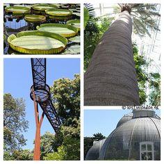 GO - Se promener sur la cime des arbres à Kew Gardens