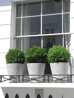 heirloom philosophy: A Nod to the Simple Boxwood