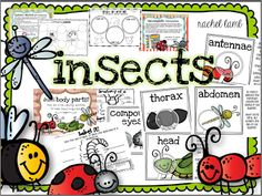 up close and personal with our insects
