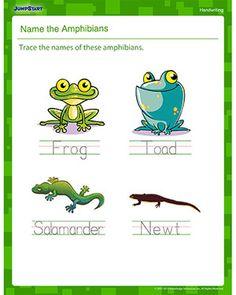 Amphibians essay