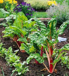 Plants have best friends just like people do. Marigolds help tomatoes and roses grow better. Nasturtiums keep bugs away from squash and broccoli. Petunias protect beans from beetles and oregano chases them away from cucumbers. Geraniums keep Japanese beetles away from roses and corn. Chives make carrots sweeter, and basil makes tomatoes even tastier.
