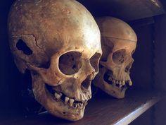 Skull Artwork, Skull Painting, Map Tattoos, Skull Tattoos, Skeleton Bones, Skull And Bones, Crane, Skull Reference, Ornament Drawing
