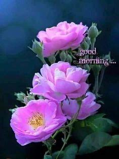the beautiful flowers Beautiful Roses, Purple Flowers, Beautiful Gardens, Pink Roses, Beautiful Flowers, My Flower, Flower Art, Morning Flowers, Love Rose