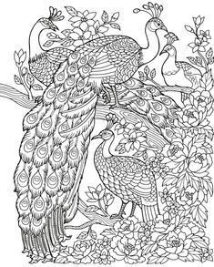 Freebie Friday Peacock Adult Coloring Book TY Page Peacock Coloring Pages, Cute Coloring Pages, Animal Coloring Pages, Printable Coloring Pages, Adult Coloring Pages, Coloring Books, Peacock Drawing, Peacock Painting, Nursery Drawings