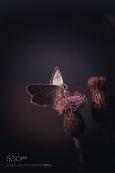 Wings by billbaroud87 #nature #photooftheday #amazing #picoftheday