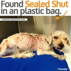 Alive dog dropped off at animal shelter wrapped in sealed plastic bags - National Pet Rescue | Examiner.com