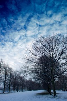 The Avenue Of Trees.. Drive way to Acklam Hall,Middlesbrough copyright to Gary Hill