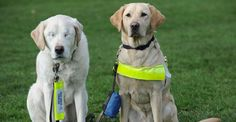 When Graham Waspe's loyal guide dog of six years was diagnosed with a rare form of glaucoma, Waspe was devastated. The local animal hospital did everything they could to preserve Edward's si...